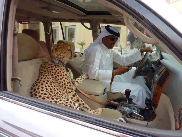 Long Term Travel - Going to Dubai - Dubai Pets