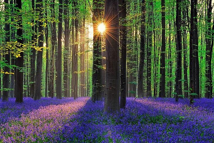 hallerbros-forest
