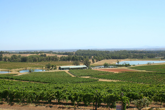 The Hunter Valley - Places to go in NSW